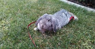 Consells per cuidar un conill domèstic