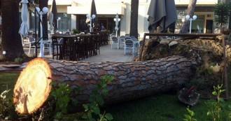 La tempesta de dijous va acabar amb el pi octogenari de l'Hotel Planas de Salou