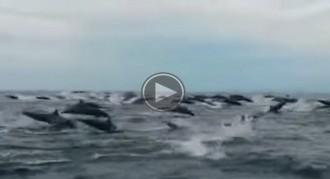 Centenars de dofins sorprenen un grup de turistes