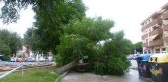 Un problema a les arrels va provocar la caiguda d'un arbre al Vendrell