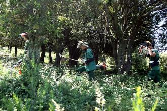Vés a: Jardiners de la Fageda tracten més 500 teixos de l'Alta Garrotxa