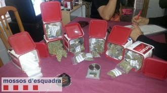 Els Mossos intervenen 112 plantes de marihuana en una casa de Deltebre