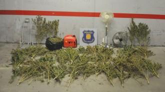 Quatre detinguts per cultivar marihuana en una casa de pagès de les Masies de Voltregà