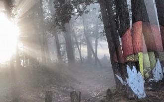 El bosc de Poblet i l'encanteri de les boires d'hivern