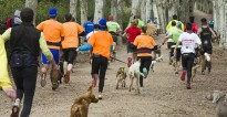 Reus acollirà una cursa i una caminada de gossos i propietaris al desembre