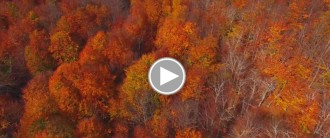 VÍDEO: Espectaculars imatges de la tardor a Santa Fe