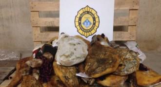 La policia de Torredembarra decomissa 19 pernils llançats a la brossa