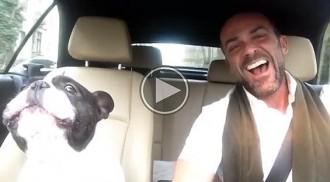 El brillant duet d'un Bulldog i el seu amo que et deixarà amb la boca oberta