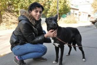La història de Shavi, una gossa que fa 320 km per retrobar-se amb la seva salvadora