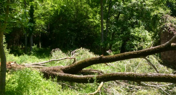 Vés a: Es regula el desarrelament d'arbres i d'arbustos en terrenys forestals