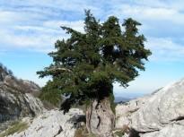 Vés a: Els boscos gironins, entre els que absorbeixen més CO2