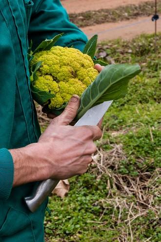 Hu|Mans, 8: Pep Montsant, agricultura ecològica