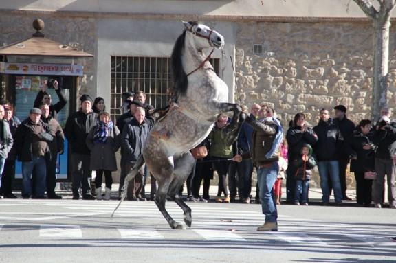 La festa de Sant Antoni de Solsona suprimeix la rifa d'animals vius