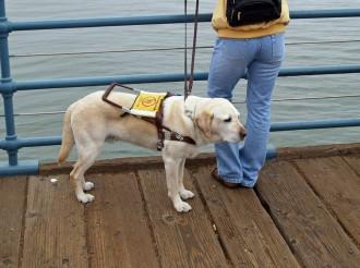 Agredeixen una dona cega amb un bat de beisbol per entrar en una botiga amb el seu gos