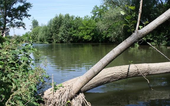 El riu Ter i els seus afluents mantenen una qualitat biològica saludable