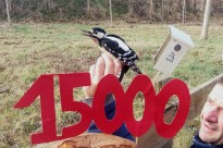 Vés a: El Grup d'Anellament de Calldetenes construeix la caixa niu 15.000