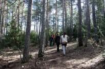 Vés a: Arriben al Solsonès les passejades pel bosc per millorar la salut