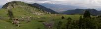 Vés a: Els canvis en la ramaderia provoquen l'expansió del bosc pirinenc