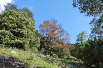 Vés a: La substitució de pinedes per alzinars afecta la respiració del sòl