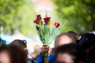 Vés a: El llarg camí de les roses per arribar a Catalunya