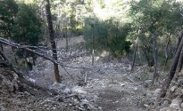 Vés a: Agricultura reconeix defectes en un aprofitament forestal del Pallars