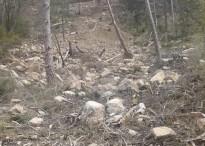 Vés a: Depana denuncia una tala il·legal del DARPA a Tolzó, Pallars Sobirà