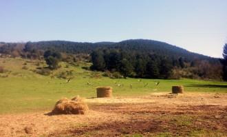 Vés a: Un ramader de Bellver de Cerdanya denúncia nous atacs de voltors