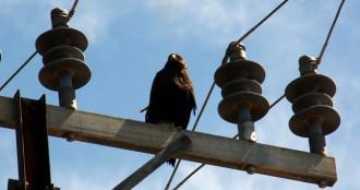 Vés a: Ipcena denunciarà les pràctiques il·legals de falconeria