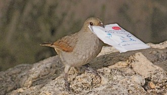 Vés a: Les aus proveeixen algunes claus per comprendre la creativitat humana
