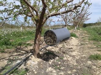 Vés a: L'IRTA estudia l'impacte d'insecticides i plaguicides sobre les abelles