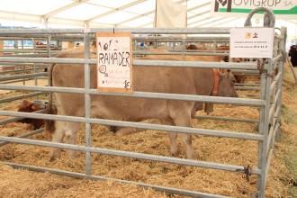 Número guanyador de la vaca de la Fira de Sant Isidre