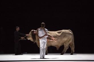 El toro de la polèmica òpera que arriba a Madrid cobrarà 22.000 euros per actuar
