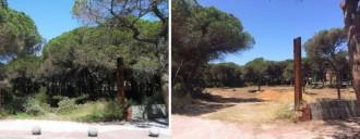 Vés a: La tala indiscriminada d'una pineda a Gavà es denunciarà a la UE