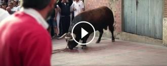 Vés a: VÍDEO El Pacma denuncia la humiliació a un toro en una festa de Castella i Lleó