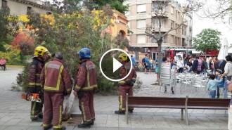 Vés a: VÍDEO Un arbre cau damunt dels clients d'un bar a Sabadell