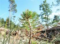 Vés a: Nou índex per mesurar com un bosc afronta pertorbacions naturals