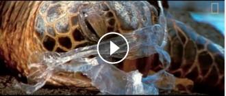 VÍDEO El patiment dels animals marins quan queden atrapats en bosses de brossa