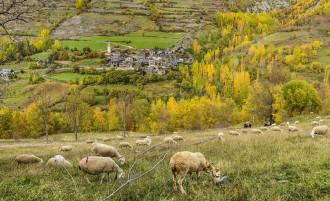 Front comú per reforçar la gestió dels espais naturals del Pirineu