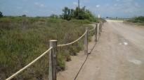 Vés a: El Parc Natural del delta de l'Ebre protegirà la vegetació natural de la platja del Serrallo