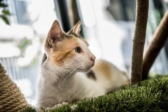 Vés a: La Panleucopenia felina, el virus que està matant gats abandonats de Catalunya