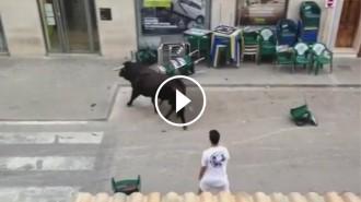 VÍDEO Un toro es cola en una oficina bancària del País Valencià