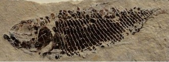 Xerrada sobre prehistòria a Odèn