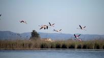 Vés a: El Delta de l'Ebre, entre les àrees importants per a la conservació de les aus amenaçades