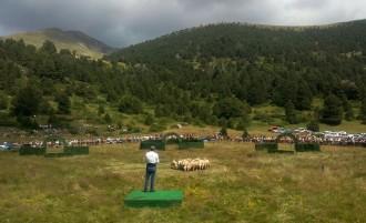 L'ovella Xisqueta i els gossos d'atura, els protagonistes a Llavorsí