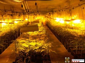 Vés a: Detenen dos homes per cultivar gairebé 600 plantes de marihuana a Manlleu, a Osona