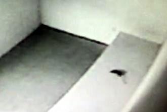 Vés a: Detecten rates a l'interior de la comissaria dels Mossos de Manresa