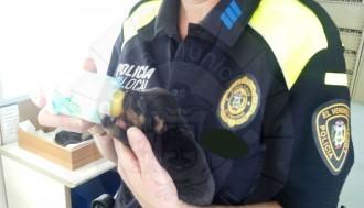 Vés a: La Policia Local del Vendrell rescata vuit cadells de gos