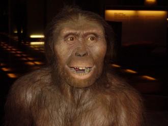Vés a: Lucy, el primer australopitec, va morir en caure d'un arbre