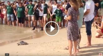Vés a: VÍDEO Alliberades a Tarragona tres tortugues babaues nascudes el 2014