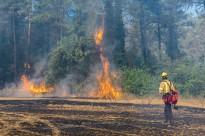 Vés a: Els Rurals apunten com a principal hipòtesi que l'incendi de l'Illa dels Bous fou intencionat